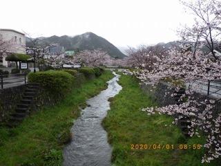 RIMG8527桜20200401.jpg