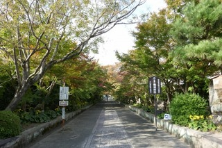 momiji20191108 (1).jpg