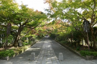momiji20191108 (2).jpg