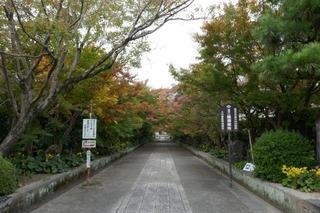 momiji20191113 (1).jpg