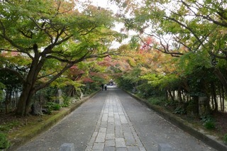 momiji20191113 (2).jpg