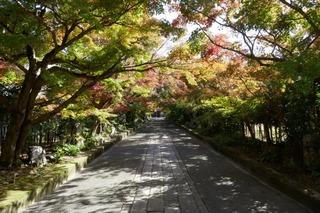momiji20191115 (2).jpg