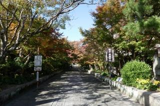momiji20191115 (3).jpg