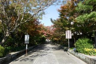 momiji20191116 (3).jpg