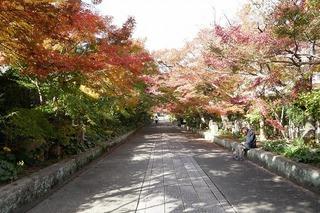 momiji20191120 (2).jpg