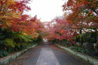 momiji20191125 (3).jpg