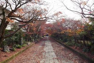momiji20191205 (1).jpg