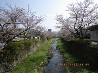 sakura20180326 (4).jpg