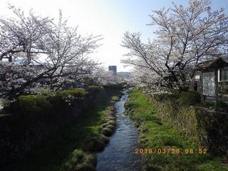 sakura2018032801.jpg