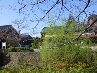 sakura20200324 (3).jpg