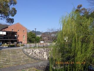 sakura20200324 (4).jpg