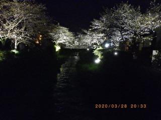 sakura2020032803.jpg