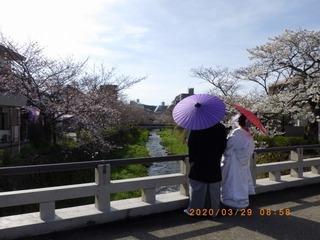 sakura2020032901.jpg