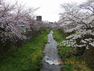 sakura2020033001.jpg