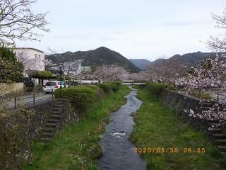 sakura2020033002.jpg