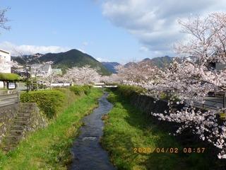 sakura2020040202.jpg