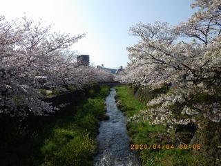 sakura2020040401.jpg
