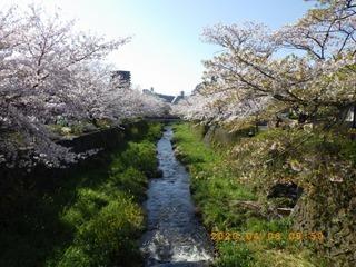 sakura2020040601.jpg